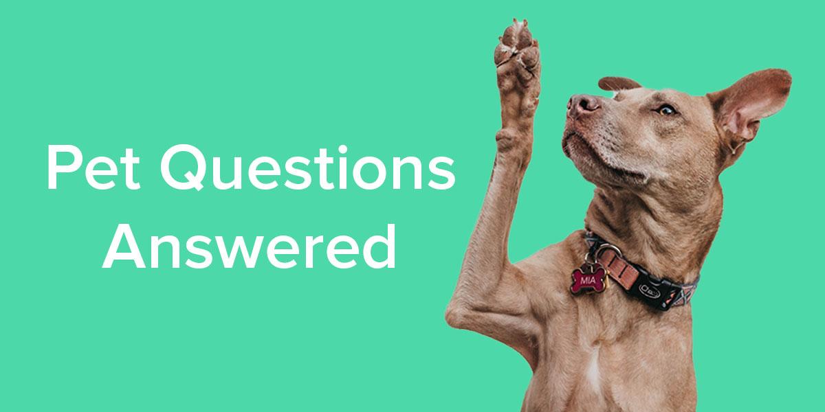 Pet Questions Answered - Emancipet Low Cost Vet Clinics
